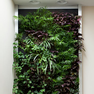Living Wall - Created by Green Star Builders